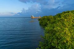 SouthPadreIsland_249 (allen ramlow) Tags: south padre island texas birding nature center bay water birds sunrise sony alpha