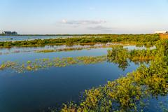 SouthPadreIsland_231 (allen ramlow) Tags: south padre island texas birding nature center bay water birds sunrise sony alpha