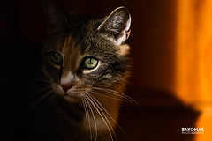 The Chaser (Jorge Pino Garcia de las Bayonas) Tags: cat cats pet cute lovely adorable light shadow lighting sun sunlight chaser pets nature hideout face portrait eyes moody nikon nikoneurope nikondeutschland fx daylight naturallight availablelight sweet photography moment animals