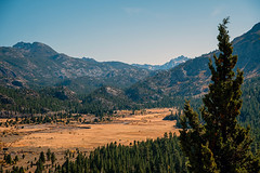 Looking Down (San Francisco Gal) Tags: leavittmeadows westwalkerriver easternsierra meadow mountain tree conifer highway108 autumn 2019