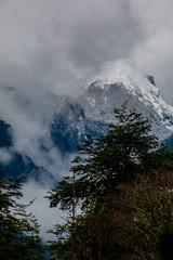 Peulla (José Rambaud) Tags: peulla andes andesrange chile patagonia loslagos arbol arboles tree travel clouds cloudscape forest bosque mountains mountain montañas montaña