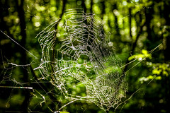 Green Life @ Great Swamp (Yuri Dedulin) Tags: 2019 great greatswampnationalwildliferefuge nj national nature newjersey newvernon refuge swamp wildlife arachnid closeup colorimage danger daytrip dew insect network outdoor pattern spider spiderwebspooky trap web webogether weekendyuridedulin