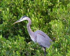 SouthPadreIsland_264 (allen ramlow) Tags: south padre island texas birding nature center bay water birds sunrise sony alpha