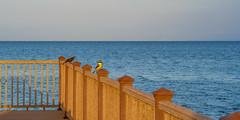 SouthPadreIsland_254 (allen ramlow) Tags: south padre island texas birding nature center bay water birds sunrise sony alpha