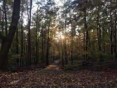 Evening Dawn / Dämmerung (Sockenhummel) Tags: wald forest bäume müggelsee herbst fall autumn dämmerung sonnenuntergang twilight gegenlicht teufelssee dusk sunset dawn sundown abendstimmung berlin