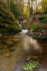 Autumn Waterfall (gillesfrancotte) Tags: 2019 amblève ardennes autumn aywaille cpl d850 haida nd ndfilter nikon ninglinspo oktober outdoor sedoz automne cascade creek eau fall forest hike landscape longexposure nature promenade randonnée stream torrent undergrowth underwood water waterfall waterscape wood provincedeliège belgique
