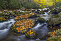 Tremont Cacade (Bernie Kasper (6 million views)) Tags: art berniekasper color colour creek cascade evening family fall fun green gsmnp greatsmokymountainnationalpark greatsmokymountains hiking history light landscape leaf love leaves longexposure nature nikon naturephotography new nwr national nikkor outdoors outdoor old outside photography park photos photo people raw river travel trail tree trees tennesse rocks rock unitedstates usa water