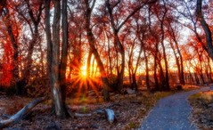 Rote de Bosque (kmetz12.km) Tags: fitness explore autumn fall nature walk hike pathway forest albuquerque southwesternphotography southwesternart newmexico