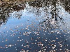 Lake in Autumn (jolynne_martinez) Tags: kansascity mo unitedstatesofamerica lake pond tree trees reflection autumn fall fallen leaves fallseason water blue sky lakedrive googlepixel outside