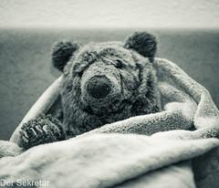 Gemütlich --- Cosy (der Sekretär) Tags: bär couch decke kuscheltier möbel möbelstück plüschtier sofa spielzeug teddy teddybär tier animal bear blanket cuddlytoy furniture itemoffurniture pieceoffurniture settee softtoy stuffedtoy teddybear toy