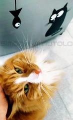 Monellino bello alla fiera dell'Est... (Scheggya2) Tags: cats cat gatti gatto