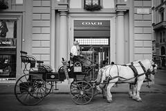 DSCF6347 (Alessandro_Giusti_1970) Tags: coach cocchiere fiaccheraio horse cavallo bw biancoenero fujifilm xt2