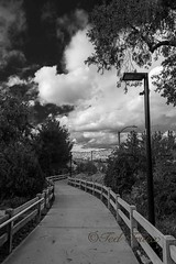 Paseo, Valencia, CA (Ted Truex) Tags: bnw clouds otherkeywords paseo tjtphotography tedtruex blackandwhite path storm stormclouds trees