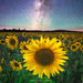 A Field Of A Thousand Suns