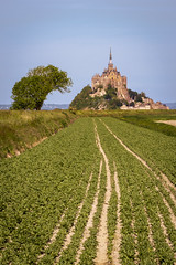 France, Normandy (Alexander JE Bradley) Tags: magical 70200mmf28 afsvrzoomnikkor70200mmf28gifed nikon70200mmf28fl d500 nikon nikkor europe france normandy lowernormandy bassenormandie manche montsaintmichel fortifications island monumenthistorique mtsaintmichel saintmichaelsmount environment architecture frenchgothic bastions buildings building religious church monastery abbey monasticfraternitiesofjerusalem residential spire citywalls fortificationtowers history landscape hinterland lookout viewpoint scenic seascape nature noperson hill alexanderjebradley photograph photography travel tourism travelphotography wwwalexanderjebradleycom wwwaperturetourscom aperturetours normandyloirevalleyworkshop unesco worldheritage heritage montsaintmichelanditsbay flowers flower floral flora naturallight day bright famousplace traveldestination sunny field agriculture polders dyke vegitables
