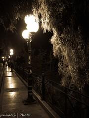 Νυκτερινή (jonhatzi) Tags: βράδυ νύκτωρ νύχτα νυκτερινή νυχτιά δέντρο ευκάλυπτοσ λάμπεσ φώτα κάγκελα πεζοδρόμιο πλάκεσ άνθρωποι ακακία φύλλα φύλλωμα στύλοσ δρόμοσ road way folliage people lights tree night post leaves acacia sidewalk stoneslabs lamps