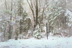 Across the Road (buffdawgus) Tags: autumn landscape nevadacity sierranevadafoothills cementhillroad lightroom6 canon50mm18 topazstudio canon5dmarkiii california nevadacounty snow