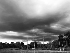 Something wicked this way comes....#cvnp #cuyahogavalleynationalpark #iratrailhead #beavermarsh #angryclouds #stormclouds (the wulf) Tags: cvnp cuyahogavalleynationalpark iratrailhead beavermarsh angryclouds stormclouds