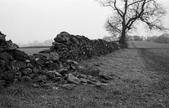 outside the wall (Mano Green) Tags: stone wall tree countryside rural dyke cumbria england uk winter january 2017 canon eos 300 40mm lens ilford hp5 35mm film ilfosol s epson v550 black white