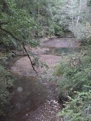 Nov2019-BigBasinCamping-P1040685 (aaron_anderer) Tags: bigbasin california state park camping fall fun chilly redwoods