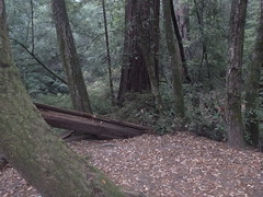 Nov2019-BigBasinCamping-P1040670 (aaron_anderer) Tags: california park camping fall fun state chilly redwoods bigbasin