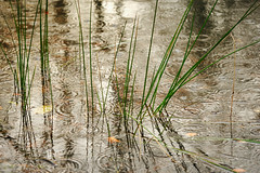 Its been a wet week (tonguedevil) Tags: outdoor outside countryside autumn nature pond water ripples reflections rain raindrops colour light leaves shadows