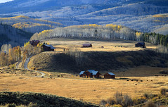Late Fall in Colorado (valentina425) Tags: colorado mountains landscapes fall autumn pass colorful hiking tree forest wood grass field mountain animal road