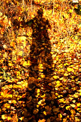 2019-10-19 (Giåm) Tags: lidingö långängen naturreservat långängensnaturreservat långängenelfviksnaturreservat stockholmslän sverige suede sweden schweden giåm guillaumebavière höst efterår automne autumn herbst