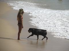 Makaha Beach (thomasgorman1) Tags: beach dog woman hawaii oahu sand shore ball fetch canon island rottweiler tide travel makaha pet