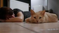 ... tu viens avec nous ...? (nounette88) Tags: carrelage chat sieste ronronthérapie pixel