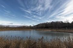DSC_7815 (PaulPagéPhotos) Tags: frozen ice ponds reeds sky autumn cattail rockcliffe ottawa nikond850 explored
