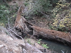Nov2019-BigBasinCamping-P1040688 (aaron_anderer) Tags: bigbasin california state park camping fall fun chilly redwoods