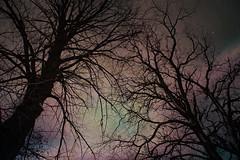 Bare Trees in My Yard (Dave Linscheid) Tags: tree autumn texture textured picmonkeyphotoeditor butterfield watonwancounty mn minnesota