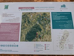 Information board in Chouf Cedar Reserve.