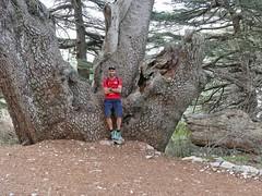 Me and a giant cedar.