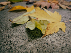 What autumn brings in (annapolis_rose) Tags: leaves autumnleaves autumncolors pixel