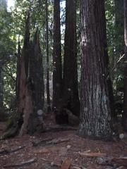 Nov2019-BigBasinCamping-P1040619 (aaron_anderer) Tags: bigbasin california state park camping fall fun chilly redwoods