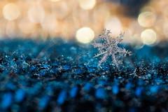 Fire and Ice (LadyBMerritt) Tags: snowflake snow ice icecrystal frozen winter macro macrosnow macrosnowflake