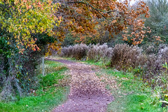 Autumn on the canal (Sheptonian) Tags: canal autumn landscape