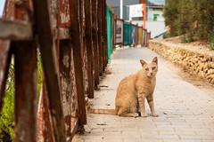Chat de Sliema (uluqui) Tags: sliema malte malta vacance holiday wander wanderlust light fuji fujifilm xt20 xtrans cat chat animal bokehlicius
