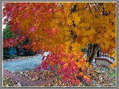 Autumn Color (James0806) Tags: washington districtofcolumbia unitedstatesofamerica autumnleaves autumncolors dupontcircleneighborhood washingtondc dcist