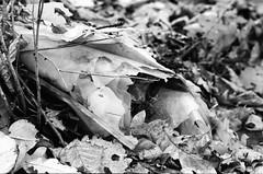 Wollmannsberg (Harald Reichmann) Tags: wollmannsberg michelberg wald boden film olympusom4 müll plastik struktur muster