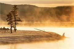 Good morning, Yellowstone! (Sandra Lipproß) Tags: sunrise river yellowstone yellowstoneriver yellowstonenationalpark wyoming frost steam landscape nature outdoor usa fall autumn cold trees rockymountains orange