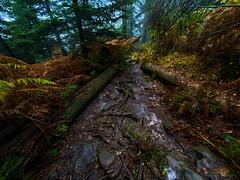 Unterwegs im Bannwald