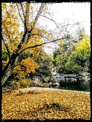 Autumn dream 🍁🍃🍂 (color raimbow) Tags: autumn goldenleaves leavescarpet river riverside water trees autumnview italy