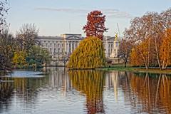 Autumn Reflections (Croydon Clicker) Tags: building architecture reflection water trees lake sky cloud autumn buckinghampalace stjamespark westminster london nikond700 nikkoraf28105mmd