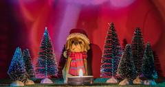 1. Advent 2019 (Günter Hentschel) Tags: weihnachten advent2019 1advent advent adventszeit adventsbilder hentschel flickr deutschland germany germania alemania allemagne europa nrw 11 2019 november november2019 nikon nikond5500 d5500 rot stimmungsbild weihnachtsdeko weihnachtsfest weihnachtsbilder