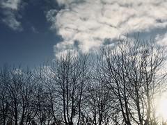 High as the sky (Petraa_) Tags: netherlands lageland prinsenpark park 010 rotterdam sun light november winter autumn cold tree blue clouds sky