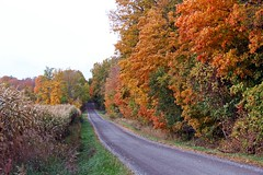 The Magic Forest - Autumn 2019 (Daryll90ca) Tags: autumnleaves autumn fall country countryroad ontario canada ontariocanada