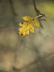 Attachement * (Titole) Tags: yellow leaf shallowdof titole nicolefaton
